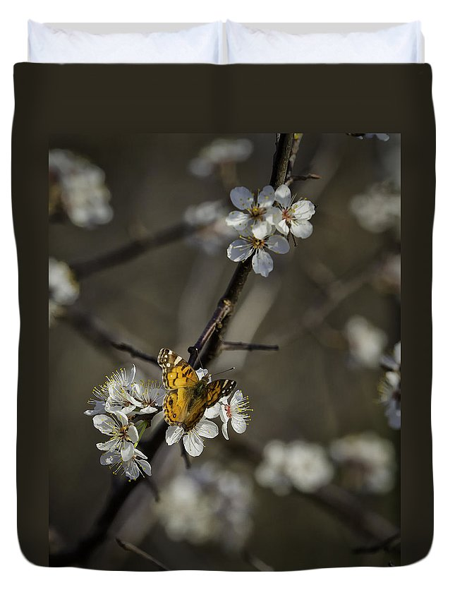Painted Lady Duvet Cover featuring the photograph Painted Lady On Wild Plum by Michael Dougherty