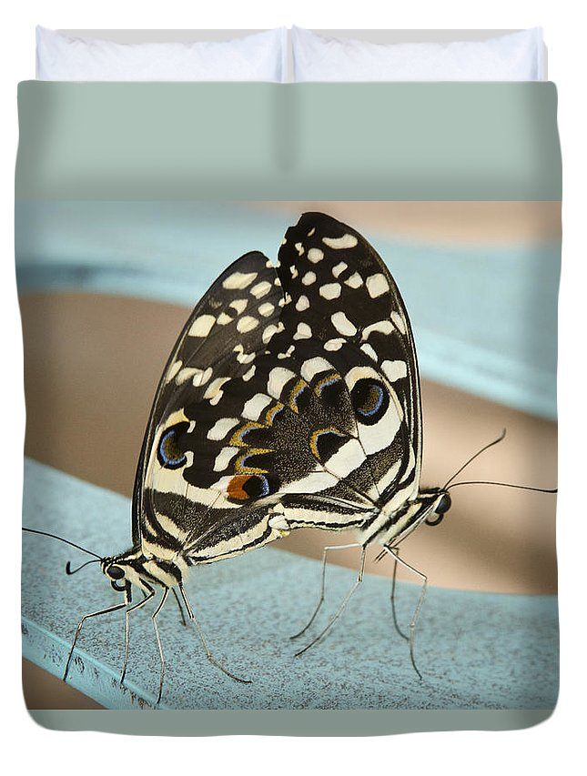 Black And White Butterfly Duvet Cover featuring the photograph Pair Of Citrus Swallowtail Butterflies by Saija Lehtonen