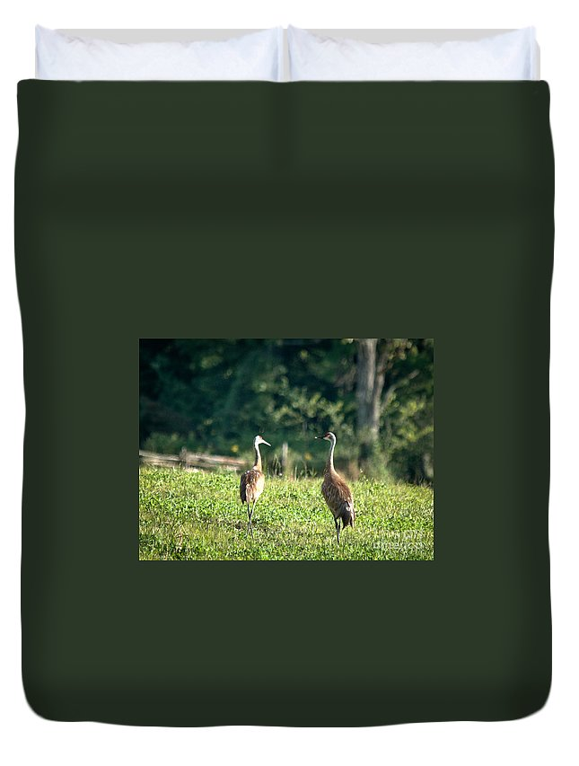 Sandhill Cranes Duvet Cover featuring the photograph Pair Of Cranes by Cheryl Baxter