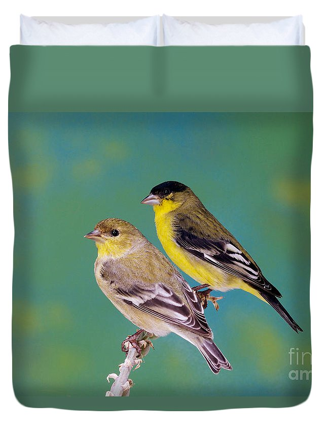 Lesser Goldfinch Duvet Cover featuring the photograph Pair Of Lesser Goldfinches by Anthony Mercieca