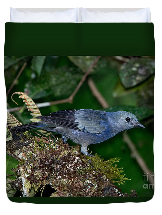 Palm Tanager Duvet Cover featuring the photograph Palm Tanager by Anthony Mercieca