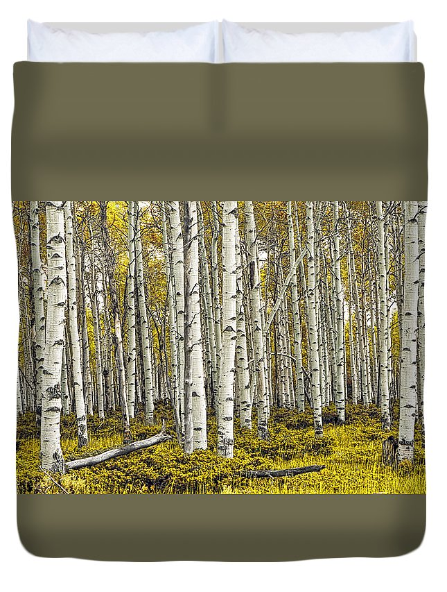 Forest Duvet Cover featuring the photograph Panoramic Birch Tree Forest by Randall Nyhof
