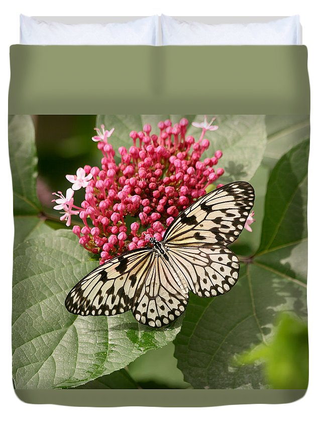 Butterfly Duvet Cover featuring the photograph Paper Kite Butterfly by Kim Hojnacki