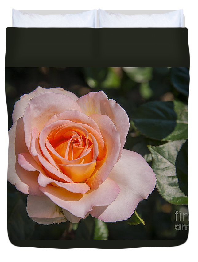 Parnell Rose Garden Dove-myer Robinson Park Auckland New Zealand Pink Roses Gardens Parks Flower Flowers Bloom Blooms Duvet Cover featuring the photograph Parnell Pink Rose by Bob Phillips