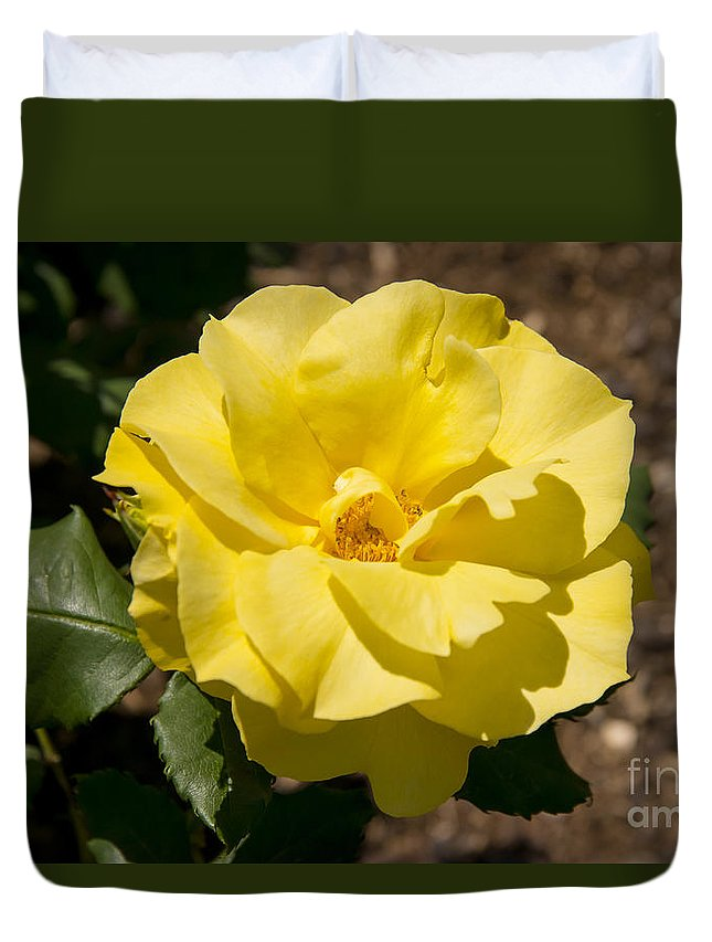 Parnell Rose Garden Dove-myer Robinson Park Auckland New Zealand Yellow Roses Gardens Parks Flower Flowers Bloom Blooms Duvet Cover featuring the photograph Parnell Yellow Rose by Bob Phillips