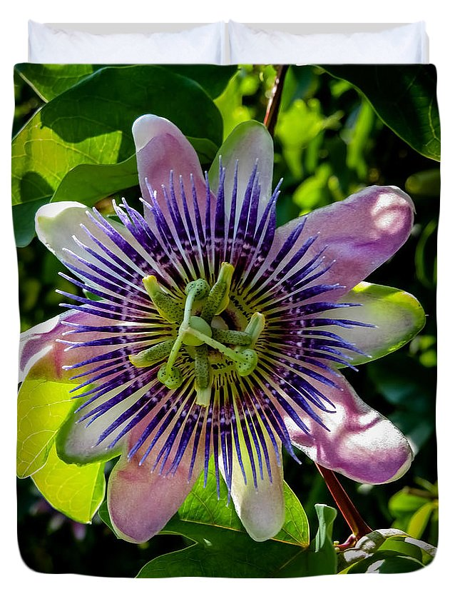 Passion Flower Duvet Cover featuring the photograph Passion Vine by Zina Stromberg