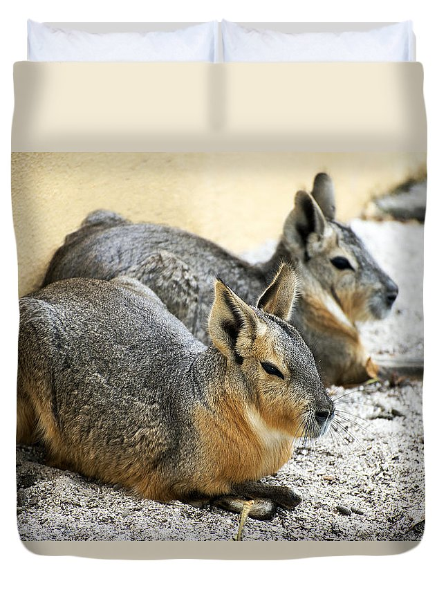 Horizontal Duvet Cover featuring the photograph Patagonian Cavies by Sally Rockefeller