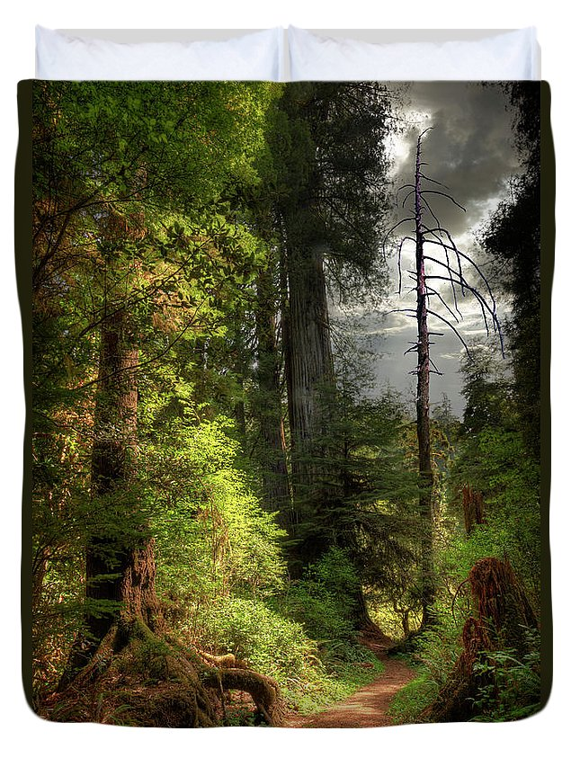 Tranquility Duvet Cover featuring the photograph Path Through Redwood Forest by Ed Freeman
