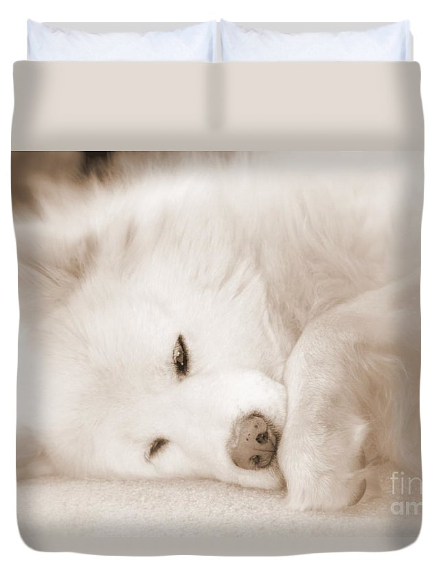 Samoyed Duvet Cover featuring the photograph Pawsome by Fiona Kennard