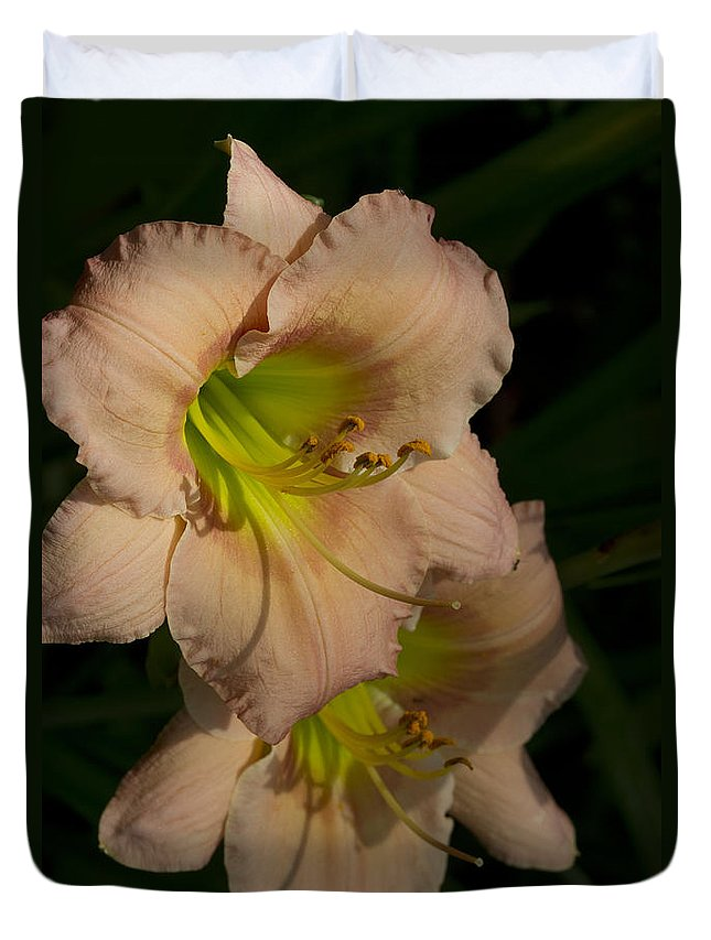 Hemerocallis Duvet Cover featuring the photograph Peach Parfait Daylilies by Kathy Clark