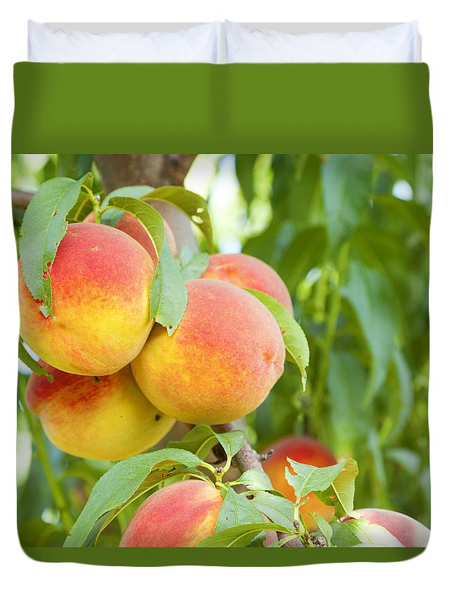 Peaches Duvet Cover featuring the photograph Peaches by Alexey Stiop