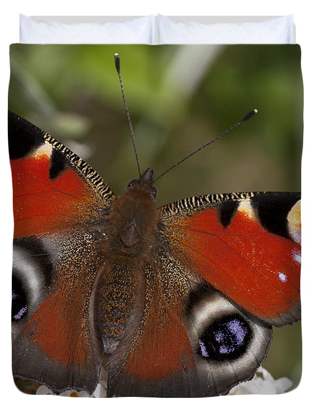 European Peacock Duvet Cover featuring the photograph Peacock Butterfly by Richard Thomas