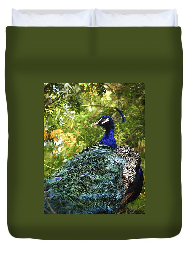 Peacock Duvet Cover featuring the photograph Peacock by Diane Wood