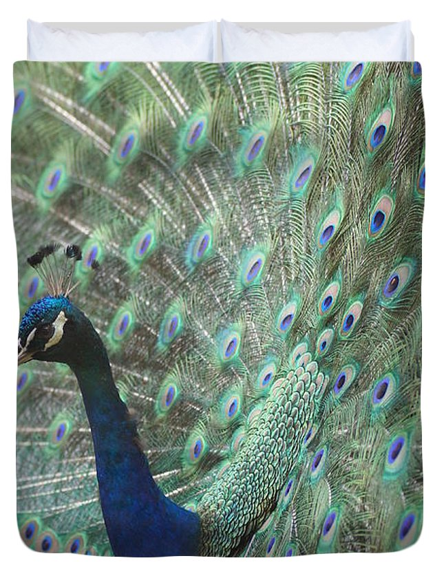 Peacocks Duvet Cover featuring the photograph Peacock by Jeffery L Bowers