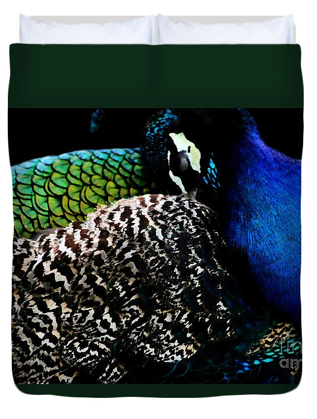 Peacock Duvet Cover featuring the photograph Peacock On Black by Nola Lee Kelsey