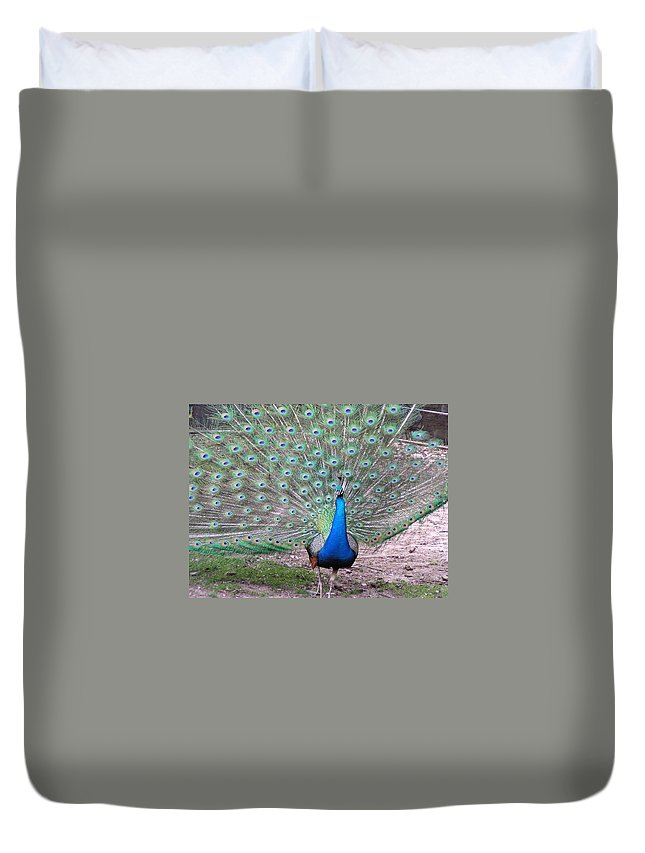 Peacock Duvet Cover featuring the photograph Peacock On Display by Heather Jane