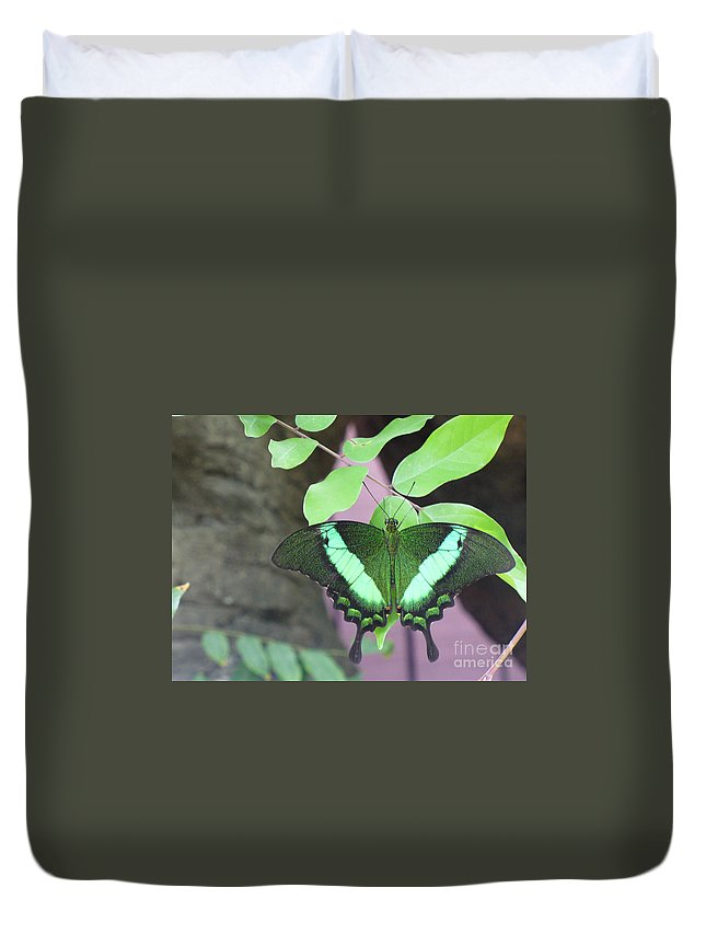 Butterfly Duvet Cover featuring the photograph Peacock Swallowtail by Lingfai Leung