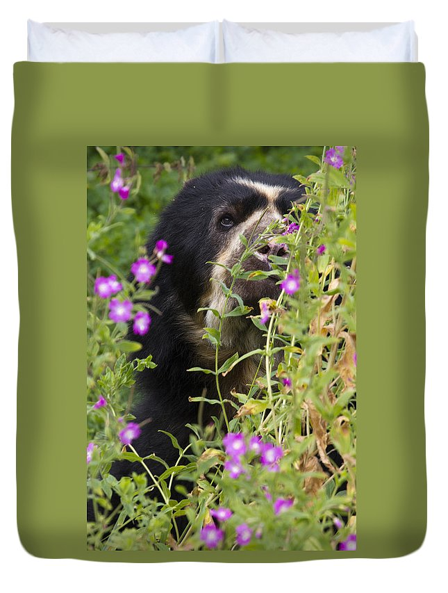 Bear Duvet Cover featuring the photograph Peaky Boo by Chris Smith