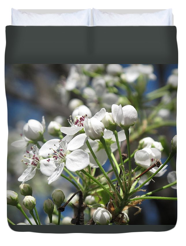 Tree Duvet Cover featuring the photograph Pear Tree In Bloom by Barbara McDevitt