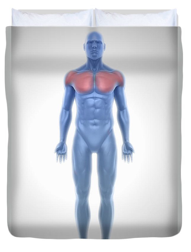 3d Visualisation Duvet Cover featuring the photograph Pectoral Muscles by Science Picture Co