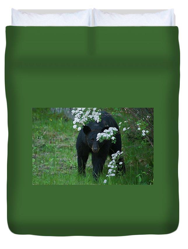Bear Duvet Cover featuring the photograph Peek-a-boo by Brenda Jacobs
