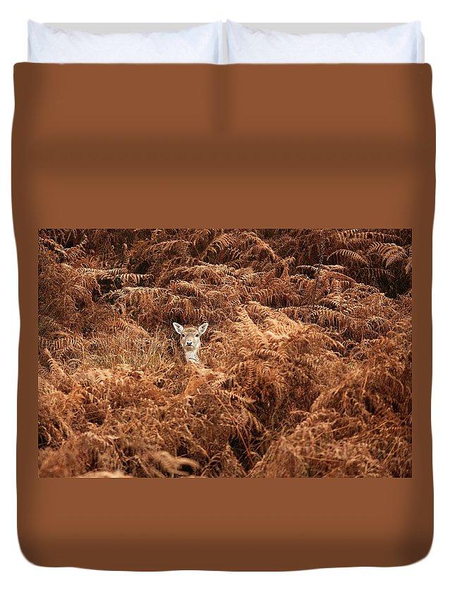 Kent Duvet Cover featuring the photograph Peek-a-boo by Markbridger