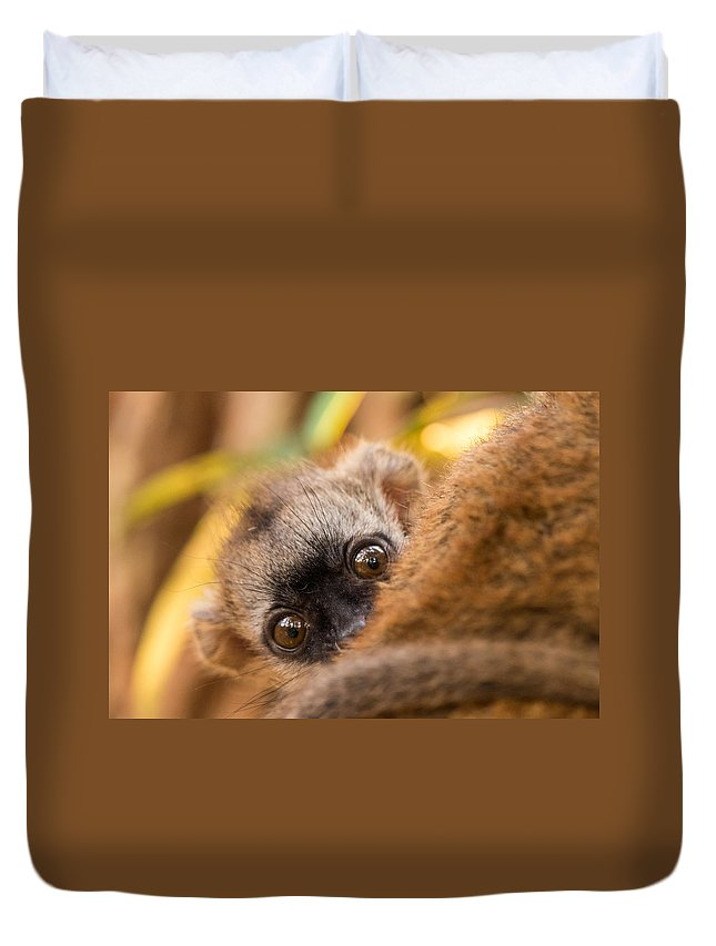 Lemur Duvet Cover featuring the photograph Peekaboo by Alex Lapidus