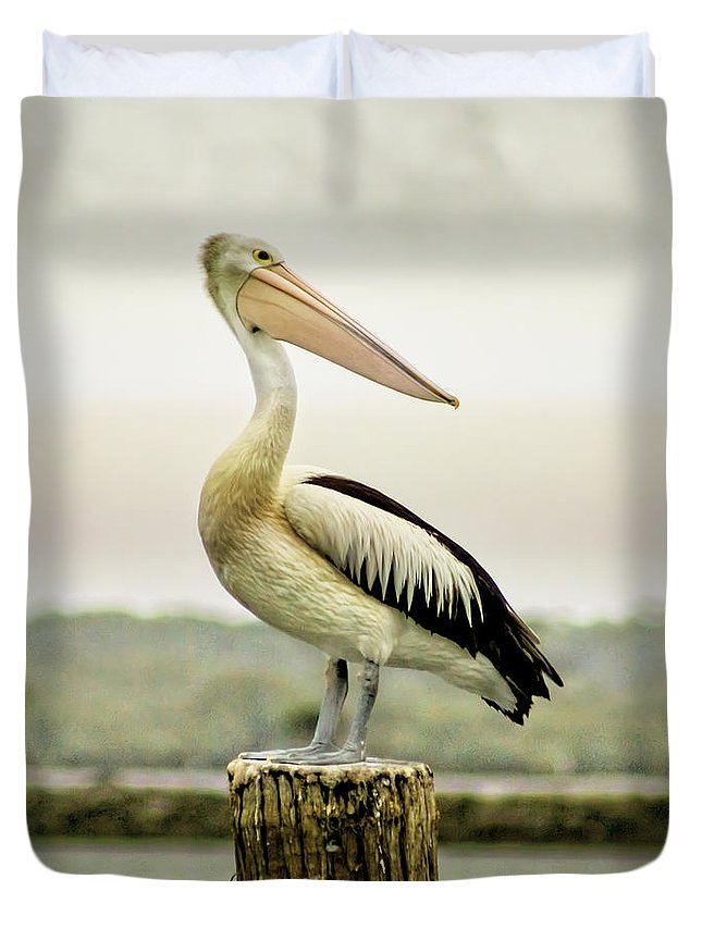 Animlas Duvet Cover featuring the photograph Pelican Poise by Holly Kempe