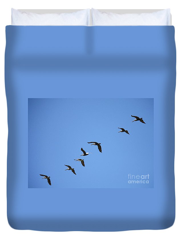 Pelicans Duvet Cover featuring the photograph Pelicans All In A Row by Carol Groenen