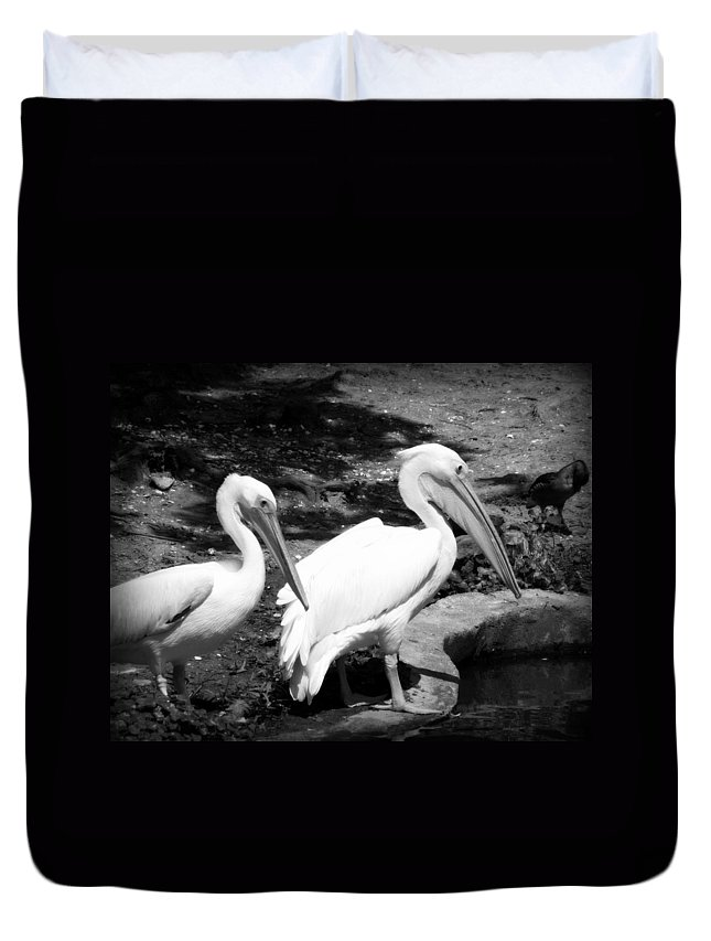 Pelicans Duvet Cover featuring the photograph Pelicans - Bw by Beth Vincent