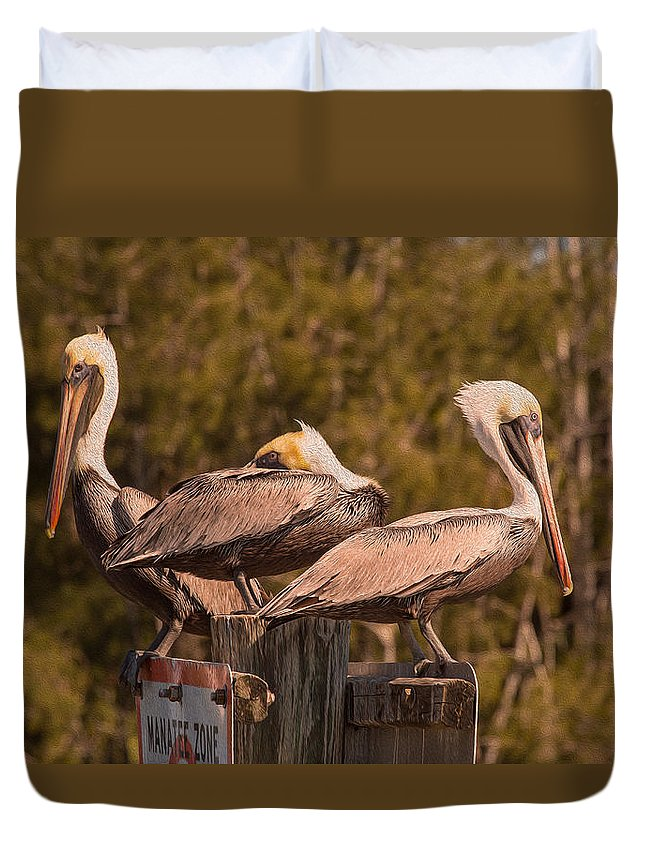 Birds Duvet Cover featuring the photograph Pelicans On Watch by John M Bailey