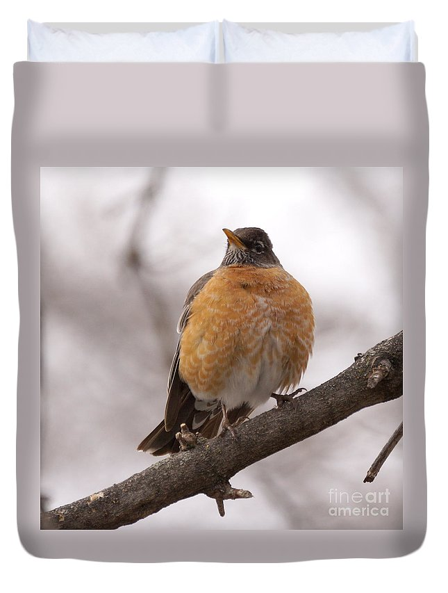 Robin Duvet Cover featuring the photograph Perched Robin by Lori Tordsen