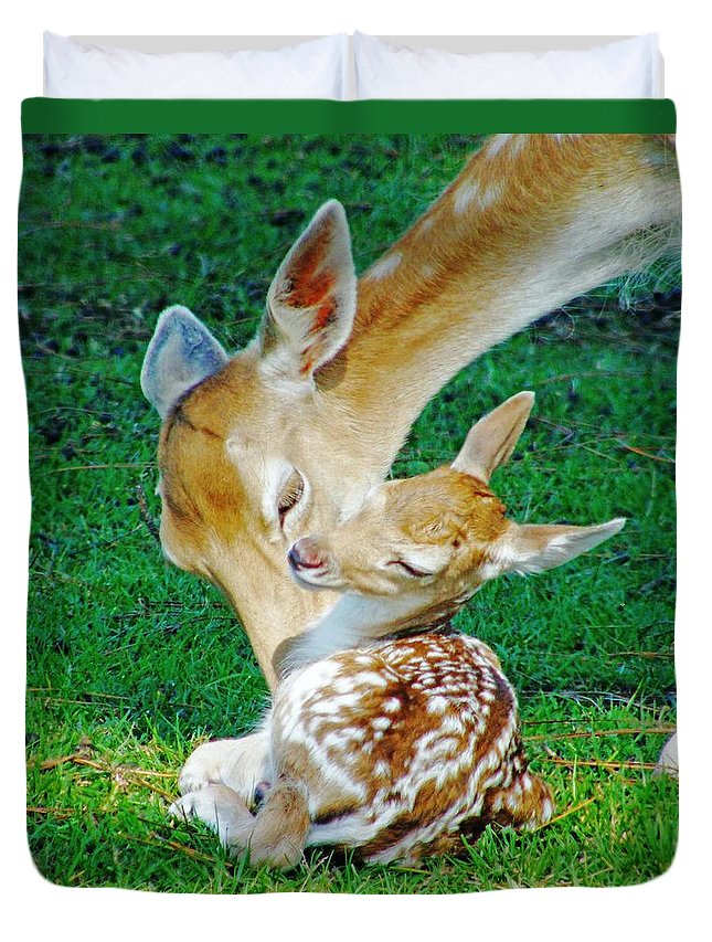 Deer Duvet Cover featuring the photograph Pere David Deer And Fawn by Lizi Beard-Ward