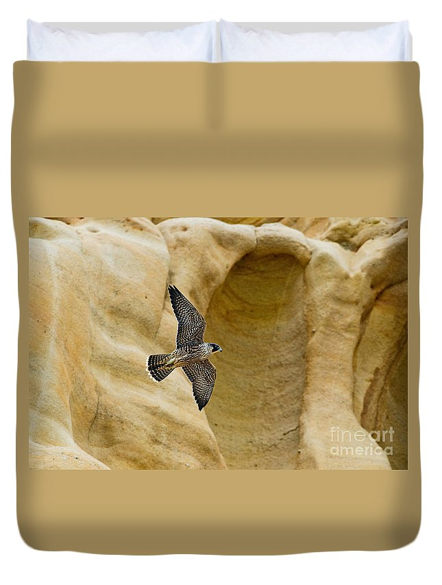 Peregrine Falcon Duvet Cover featuring the photograph Peregrine Falcon Flying By Cliff by Anthony Mercieca