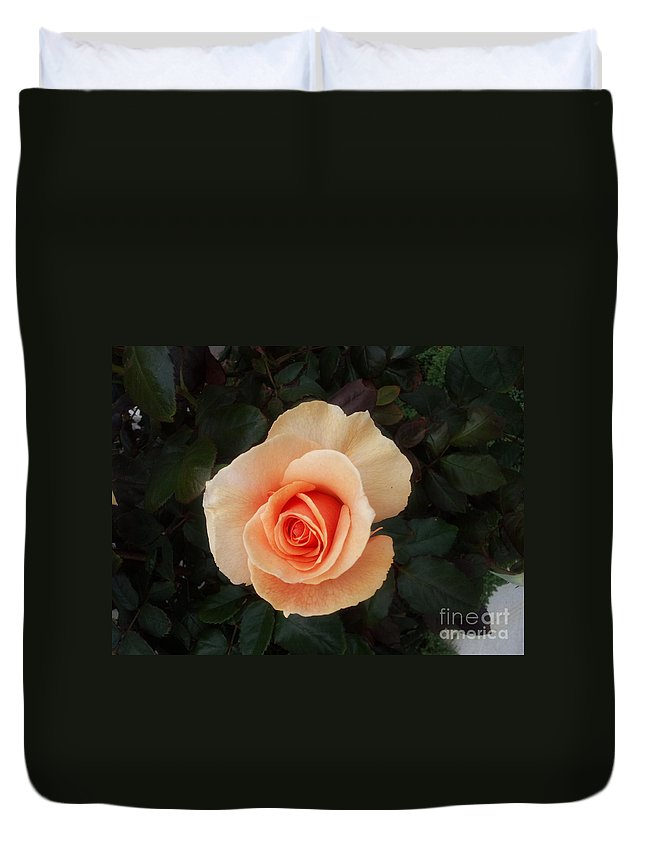 Perfect Duvet Cover featuring the photograph Perfect Peach Rose by Bev Conover
