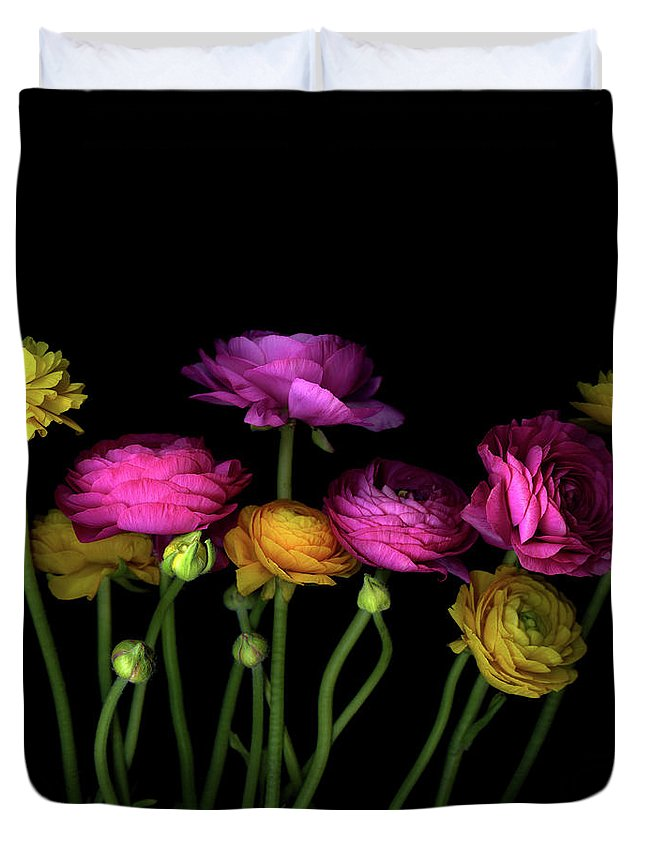 Black Background Duvet Cover featuring the photograph Persian Buttercups Ranunculus Asiaticus by Photograph By Magda Indigo