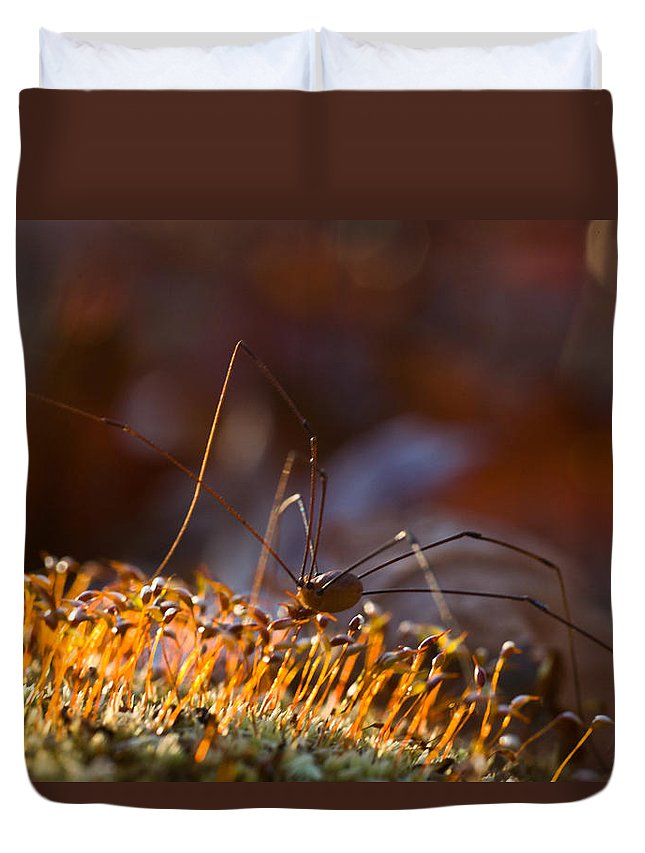 Phalangid Duvet Cover featuring the photograph Phalangid Among The Moss Capsules by Douglas Barnett