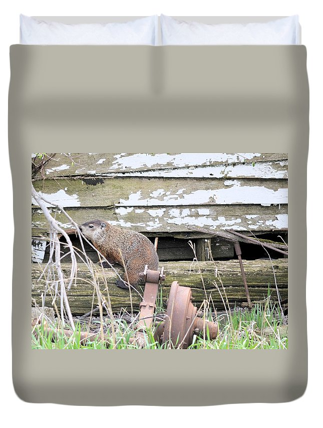 Groundhog Duvet Cover featuring the photograph Phil The Liar by Bonfire Photography