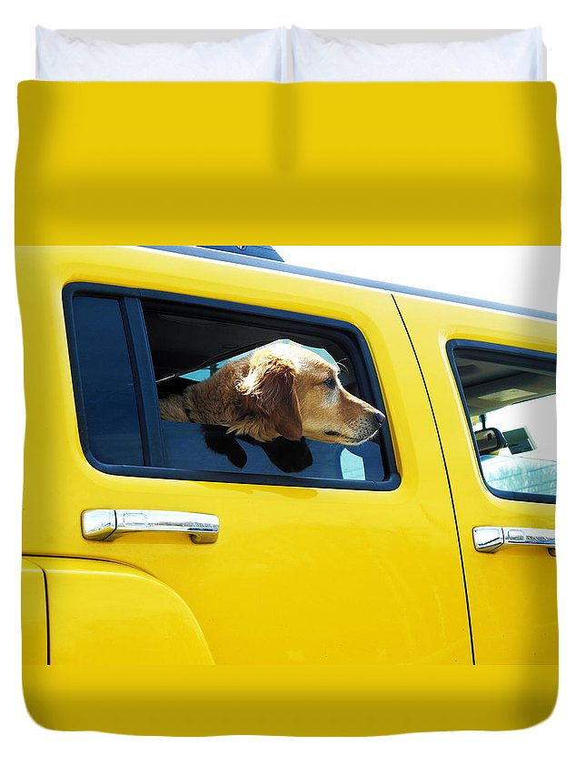 Animals Duvet Cover featuring the photograph Yellow With Lab by Joel Zimmerman