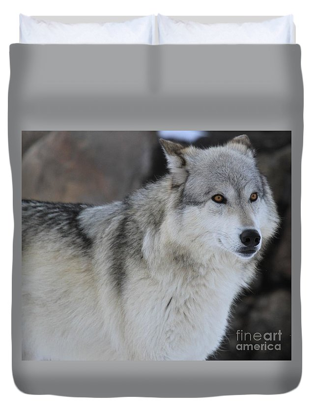 Alpha Wolf Duvet Cover featuring the photograph Piercing Eyes by Adam Jewell