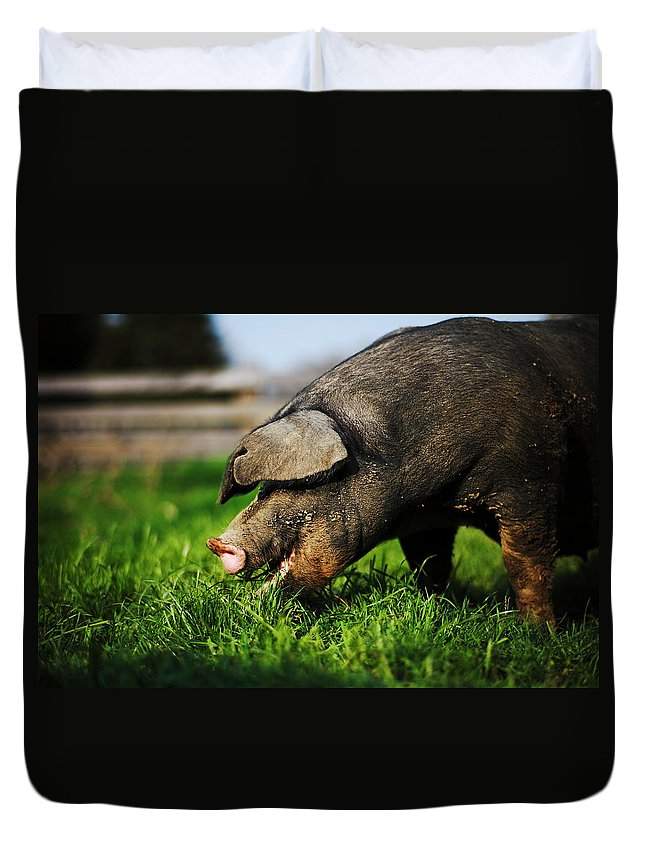 Pig Duvet Cover featuring the photograph Pig Eating by Jimss
