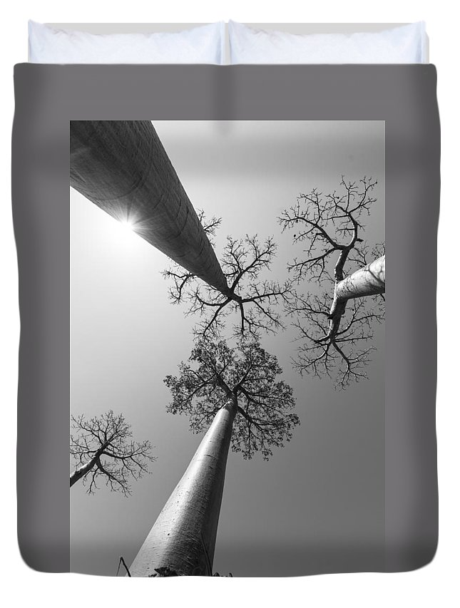Trees Duvet Cover featuring the photograph Pillars Of The Community by Alex Lapidus