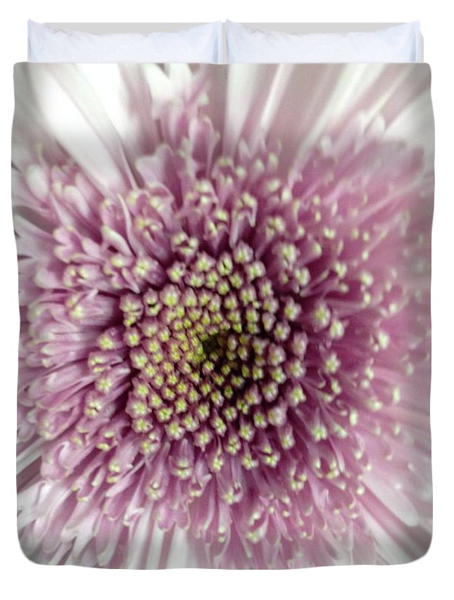 Flower Duvet Cover featuring the photograph Pink And White Chrysanthemum by Marian Palucci-Lonzetta