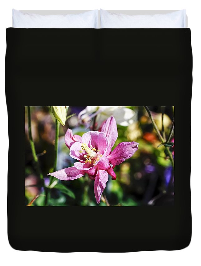 Pink Columbine Duvet Cover featuring the photograph Pink Columbine by Cynthia Woods