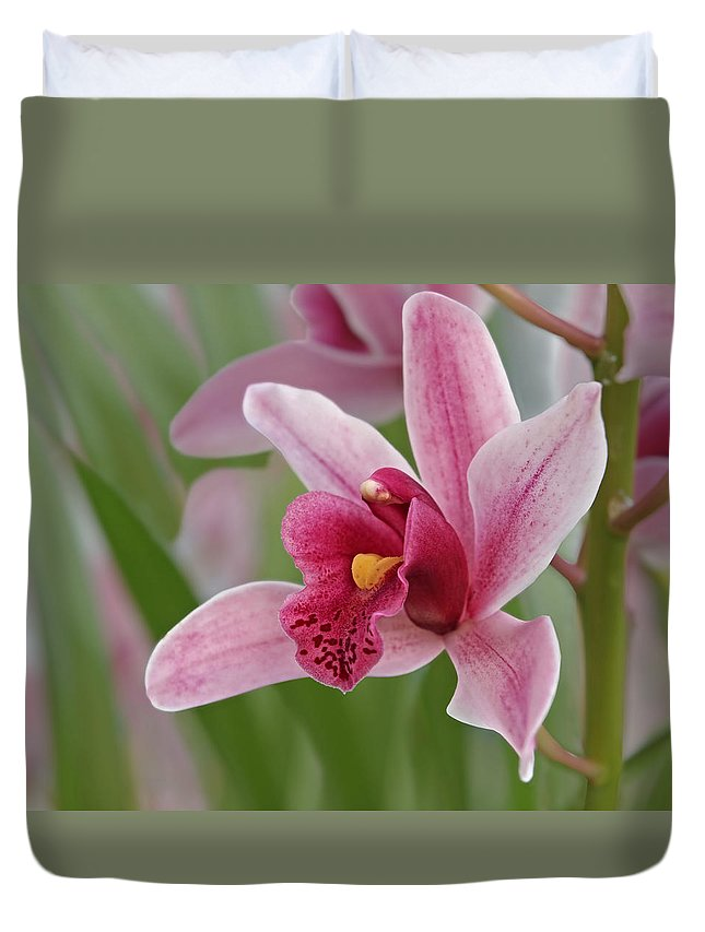 Orchid Duvet Cover featuring the photograph Pink Cymbidium Orchid by Gill Billington