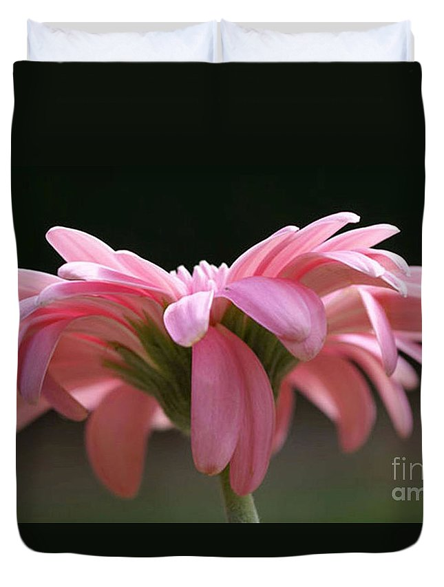 Pink Duvet Cover featuring the photograph Pink Daisy 1 by Carol Lynch