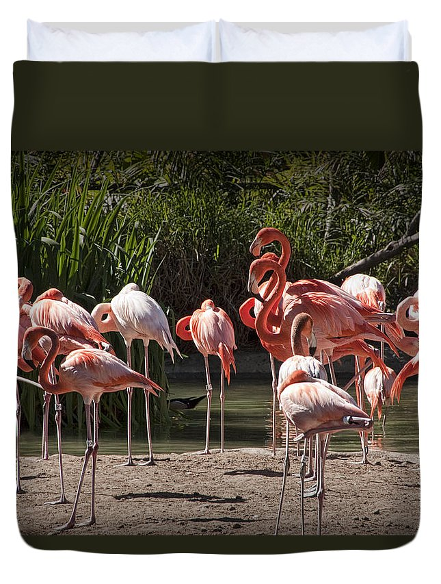 Bird Duvet Cover featuring the photograph Pink Falmingos At The San Diego Zoo by Randall Nyhof