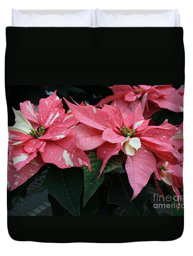 Flowers Duvet Cover featuring the photograph Pink Marble Poinsettia by Kathy DesJardins