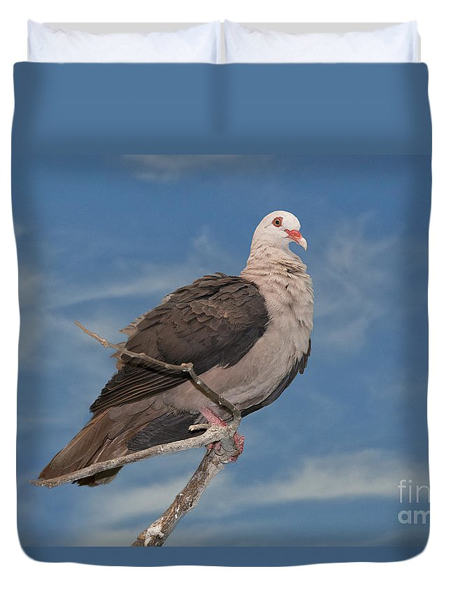 Mauritius Pink Pigeon Duvet Cover featuring the photograph Pink Pigeon by Anthony Mercieca
