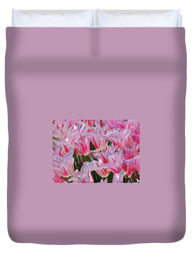 Pink Tulips Duvet Cover featuring the photograph Pink Tulips 3 by Allen Beatty